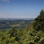 WaldWipfelWeg in Sankt Englmar/Maibrunn