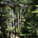Baumwipfelpfad im Nationalparkzentrum Lusen bei Neuschönau